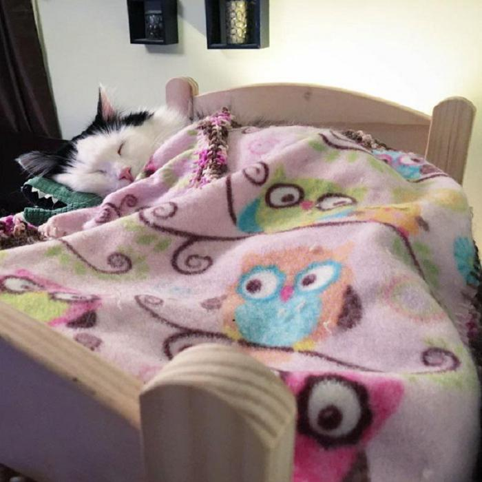 Спасенная кошечка теперь спит по ночам в собственной маленькой кроватке