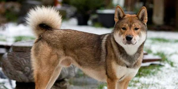 Обзор пород охотничьих собак с фотографиями, названиями и описанием