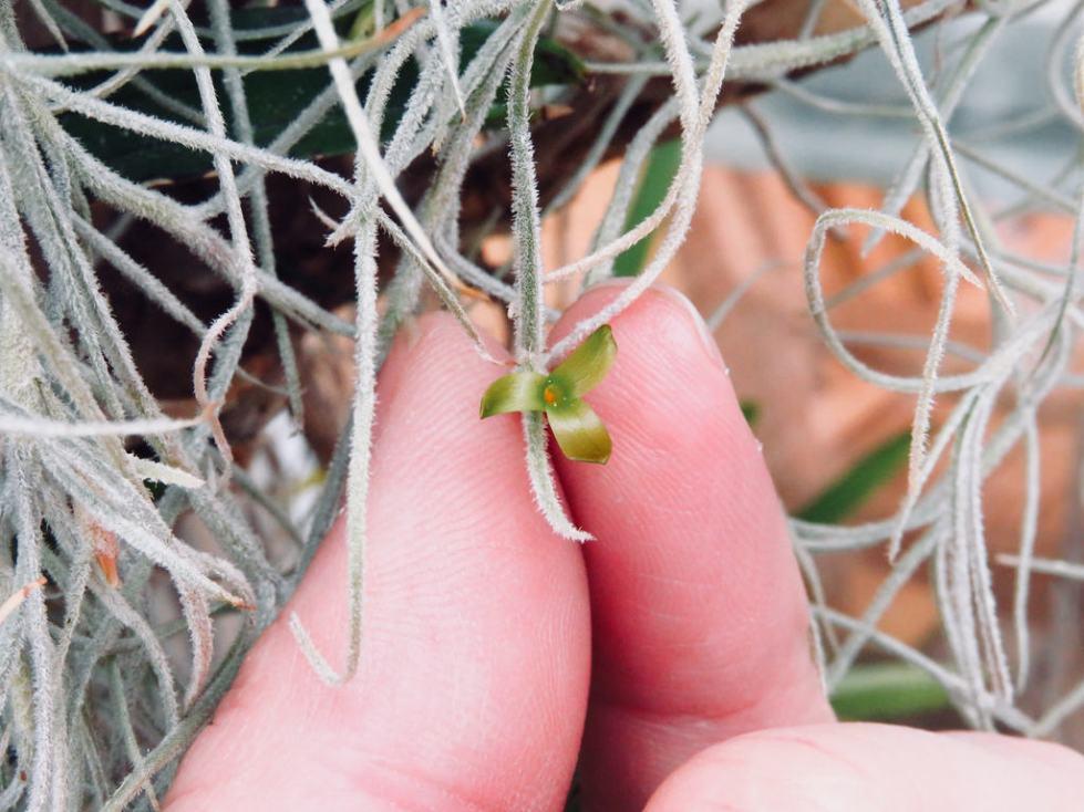 Стебли растения