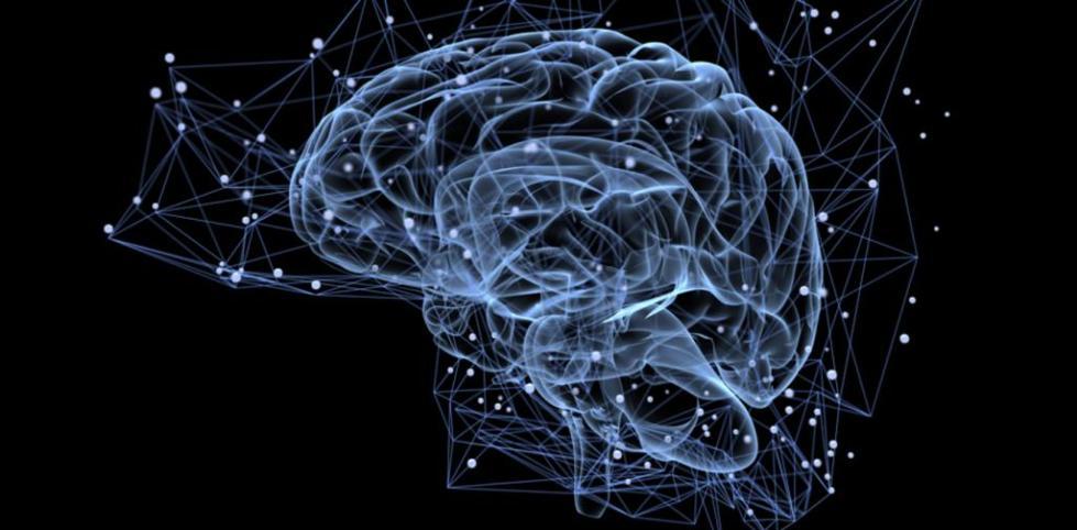 Иллюстрация головного мозга.