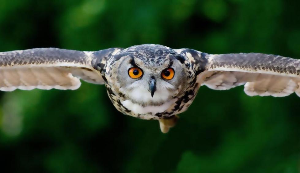 Символ мудрости сова