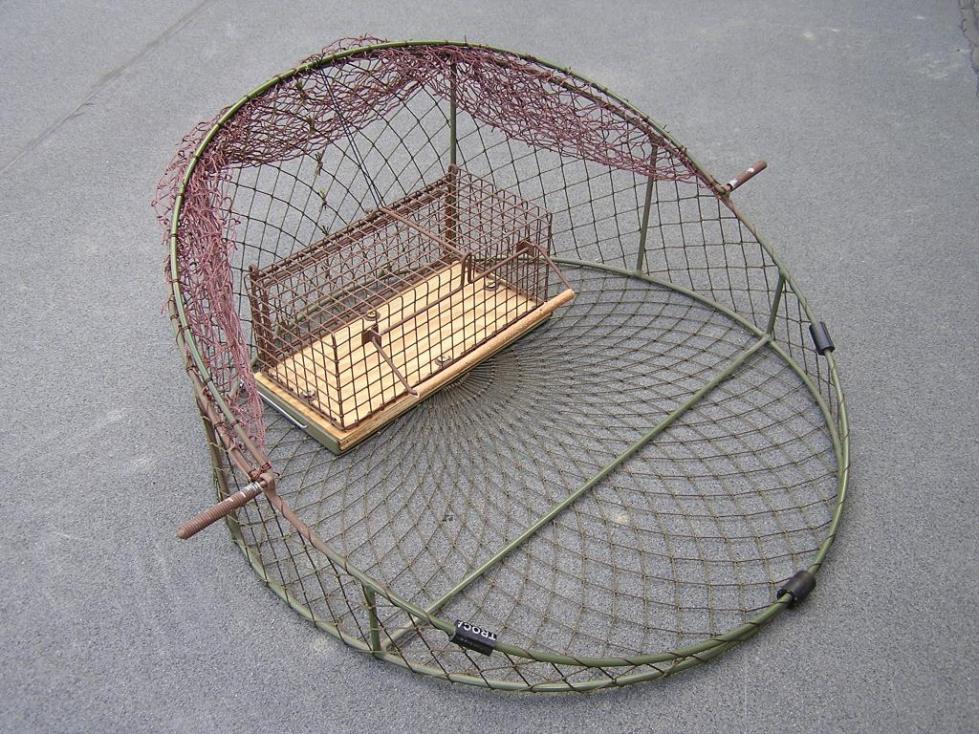Ловушка для ястреба
