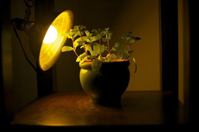 лампа для подсветки комнатных растений