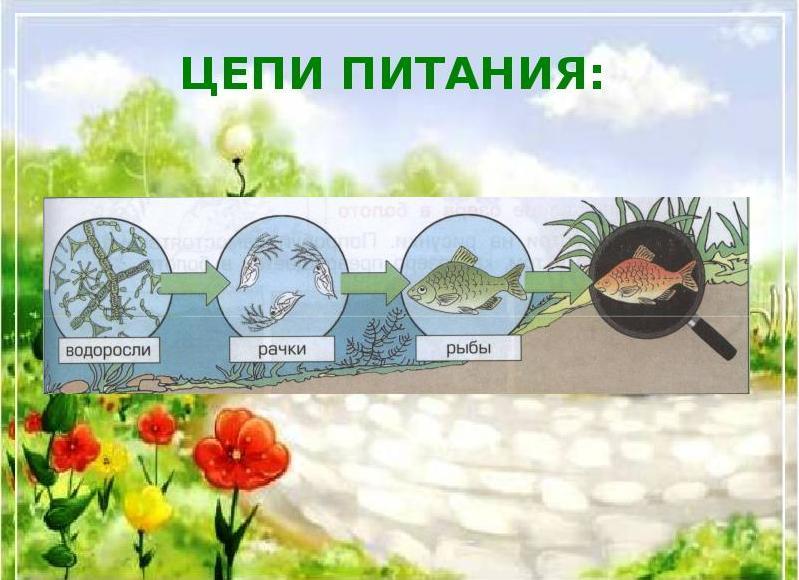 для водорослей характерен способ питания
