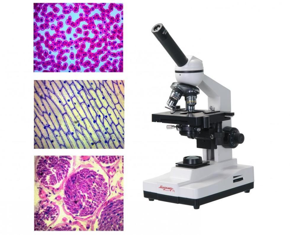 Изучение с помощью микроскопа