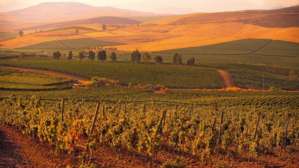 Виноградники Сицилии
