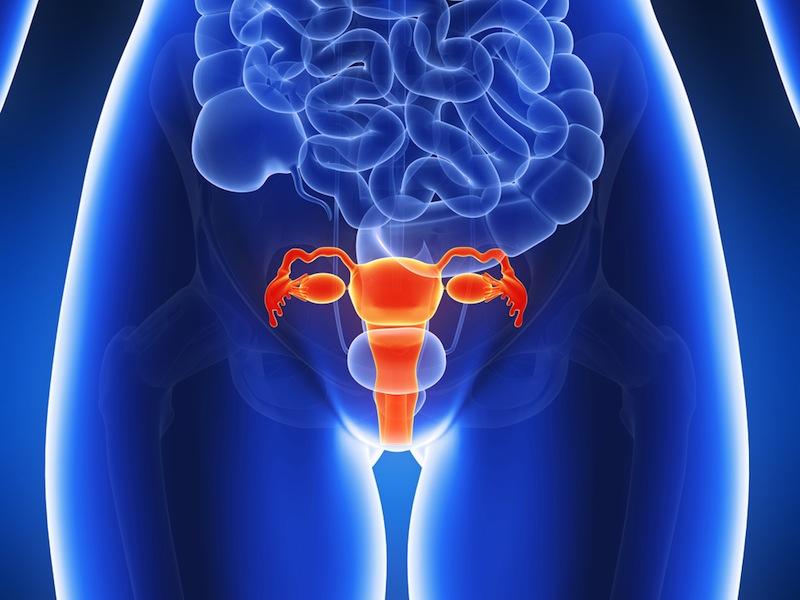 Схематичное изображение женского таза