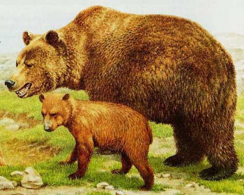 Медведица с детенышем