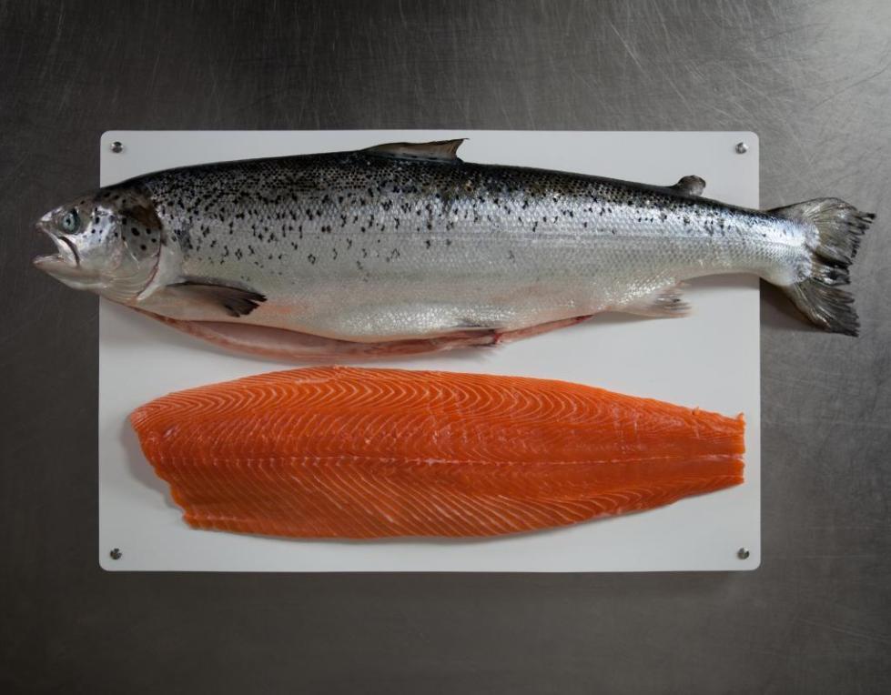 Семга или атлантический лосось