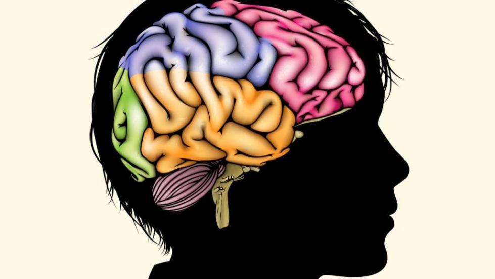 Мозг подростка.