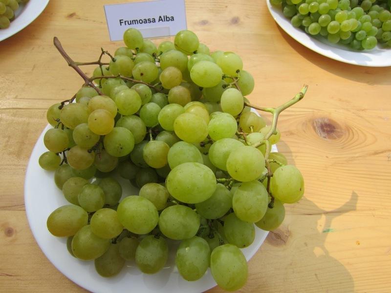 виноград в тарелке