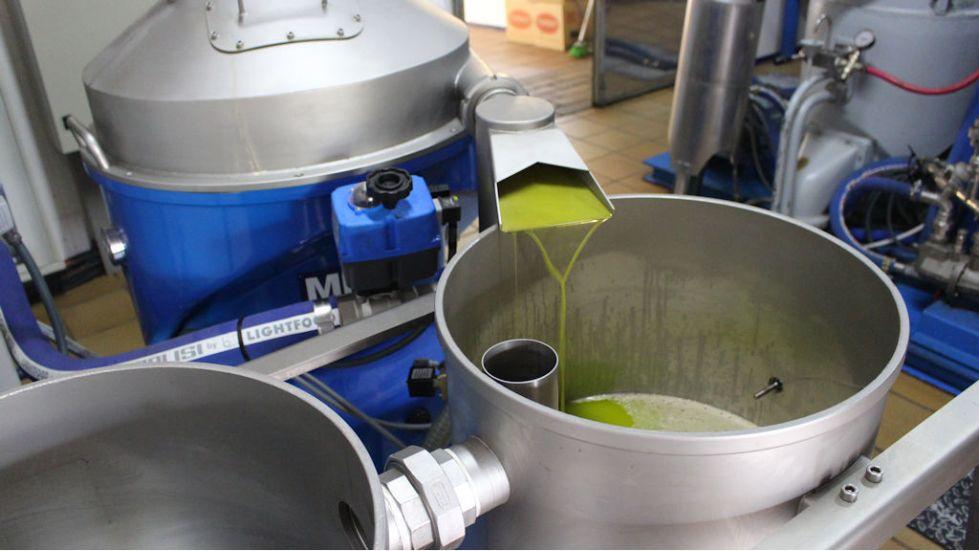 Производство оливкового масла