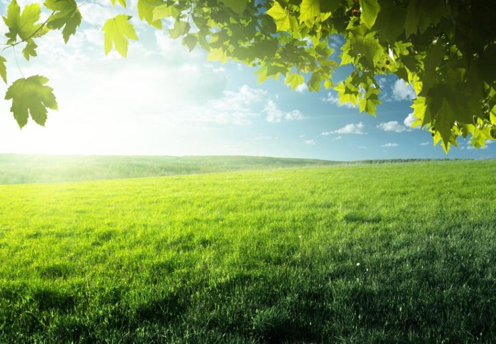 Растения поглощают кислород и выделяют углекислый газ