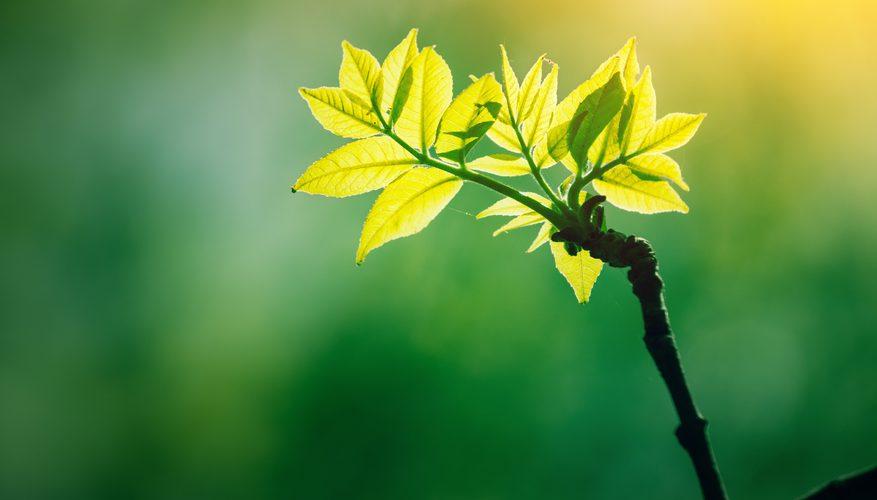 Растения в процессе фотосинтеза