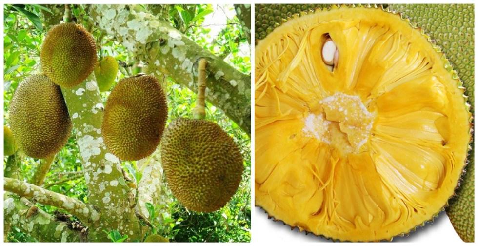Джекфрут - самый крупный фрукт Китая