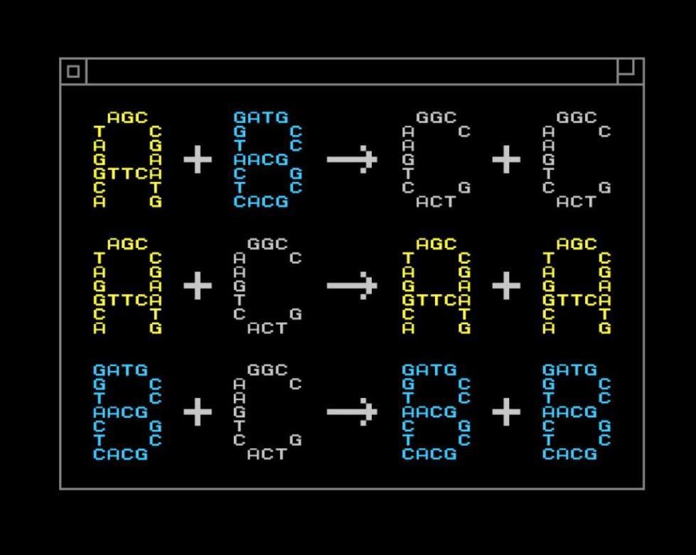 основные термины программирования