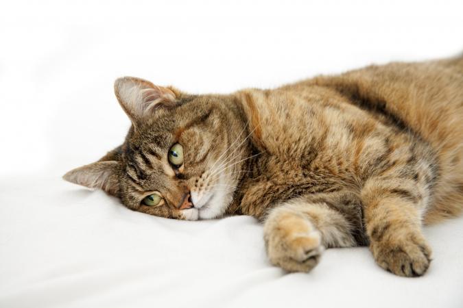 Рвота у кошки желтого цвета с пеной