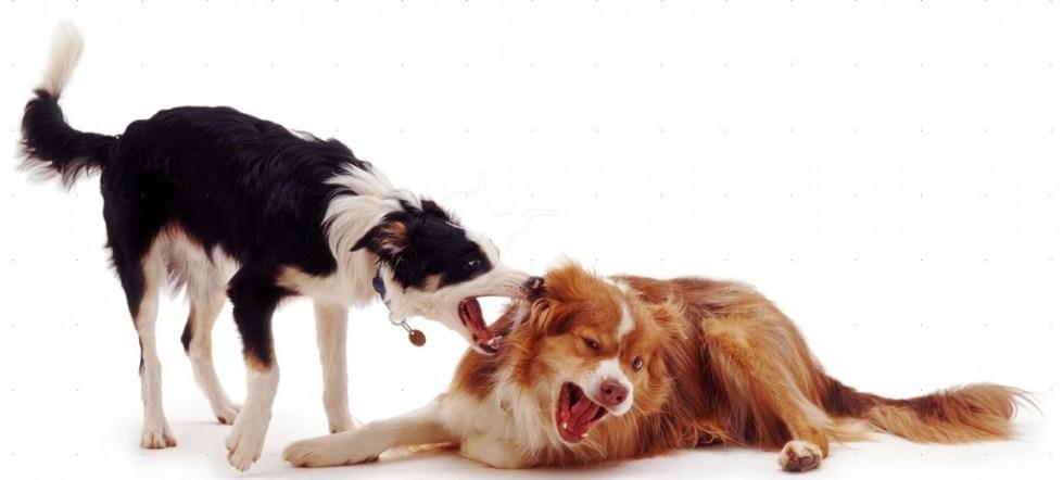 Собачье общение
