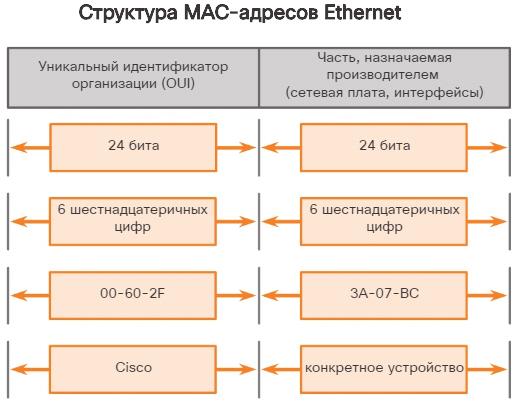 Структура MAC-адреса сетевого устройства