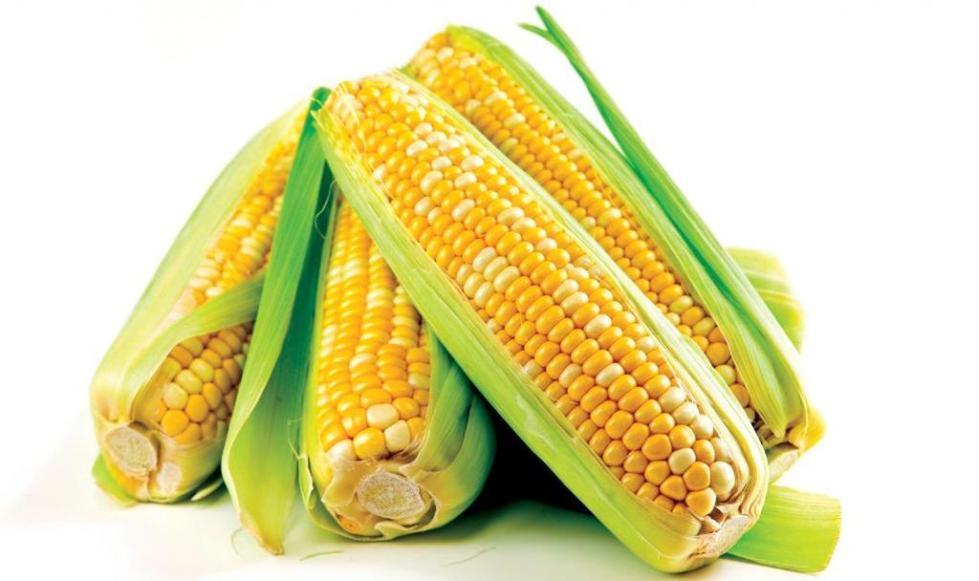 Кукуруза консервированная: польза и вред для похудения