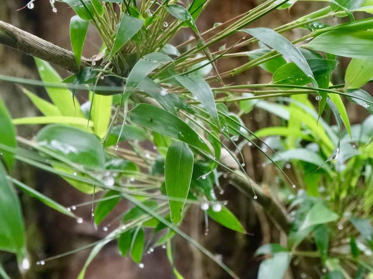 Kolumbianisches Grün (Bild: Martina Schäfer, Textagentur, Textrakt)