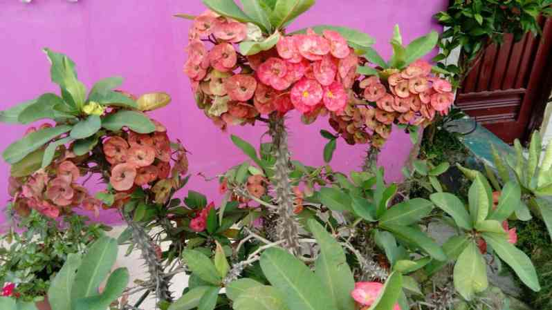 Eine Agropflanze (Bild: M. Schäfer, Textrakt)