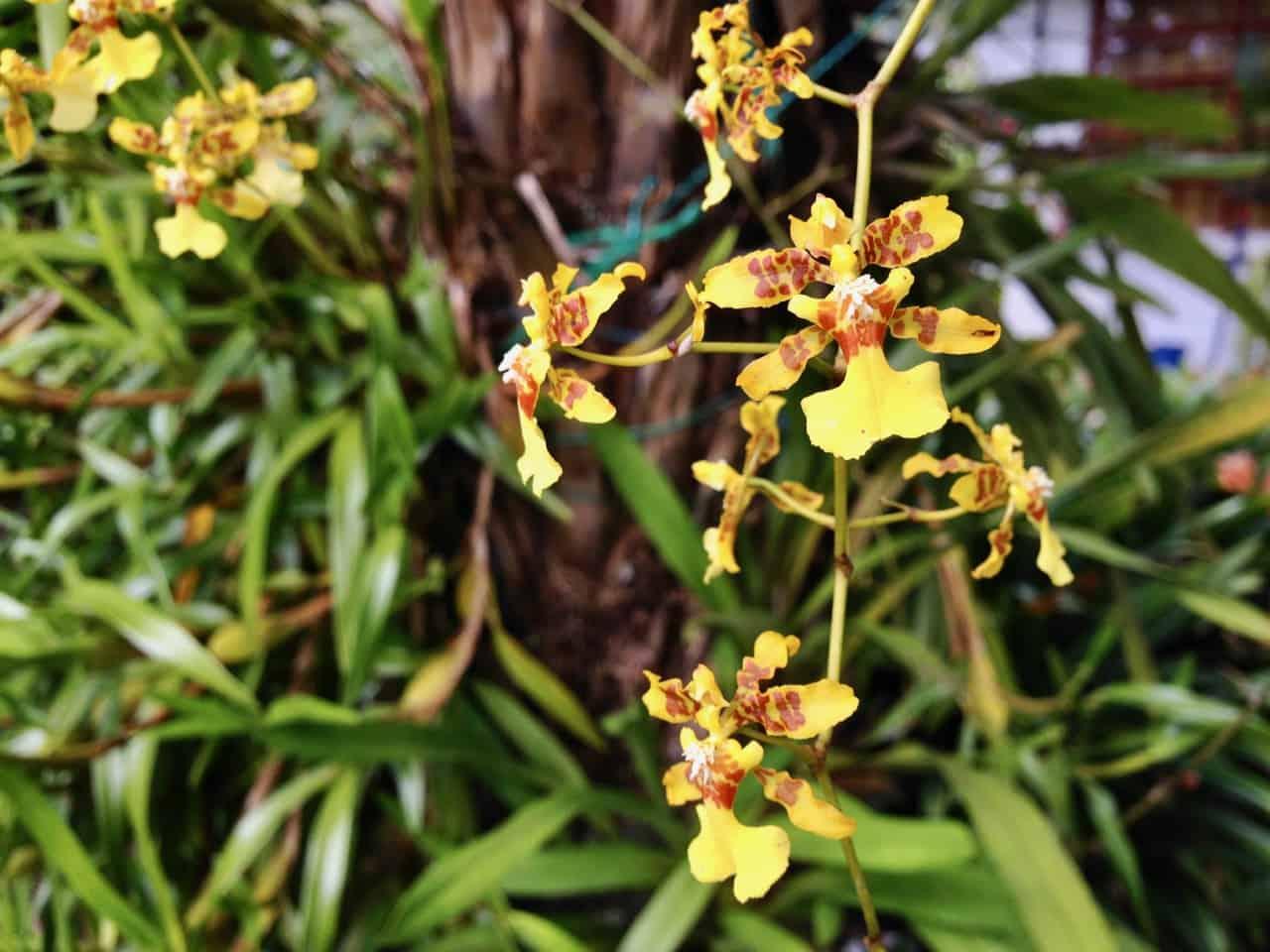 Orchideen (Bild: Martina Schäfer, Textrakt)