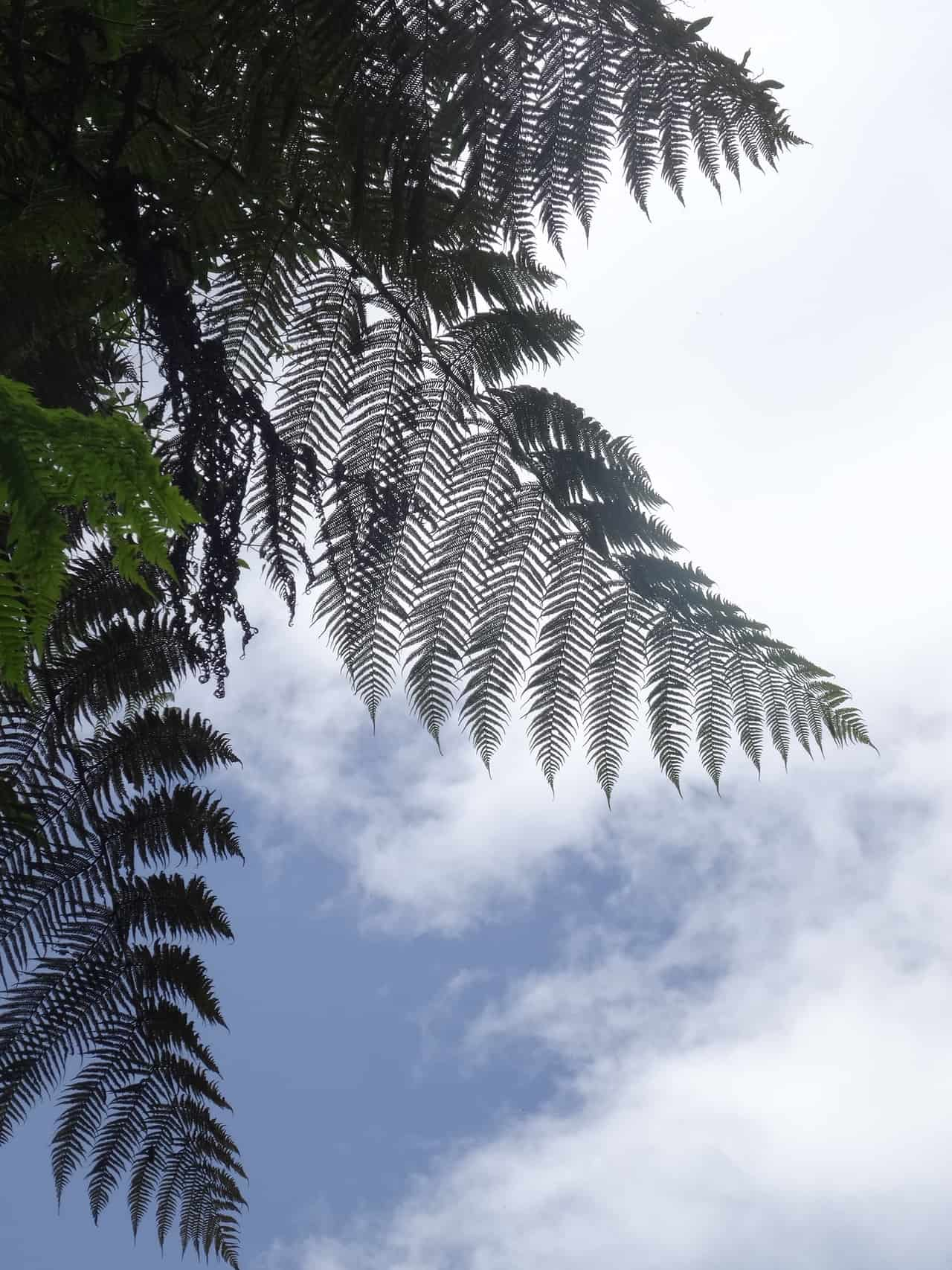 Natur (Bild: Martina Schäfer, Textrakt Textagentur)