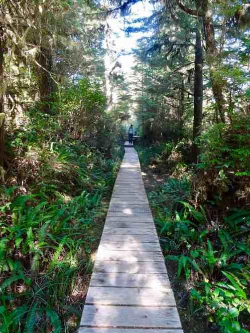 Waldweg auf Vancouver Island, Kanada (M. Schäfer, Textrakt)