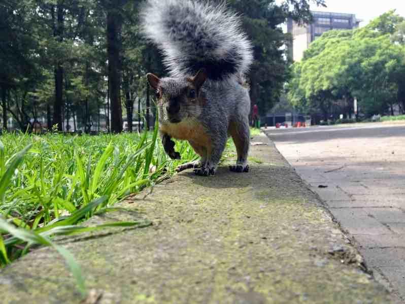 Ein Hörnchen (Bild: M. Schäfer, Textrakt)