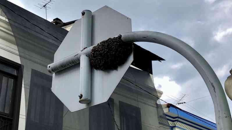 Stadtbienen (Bild: M. Schäfer, Textrakt)