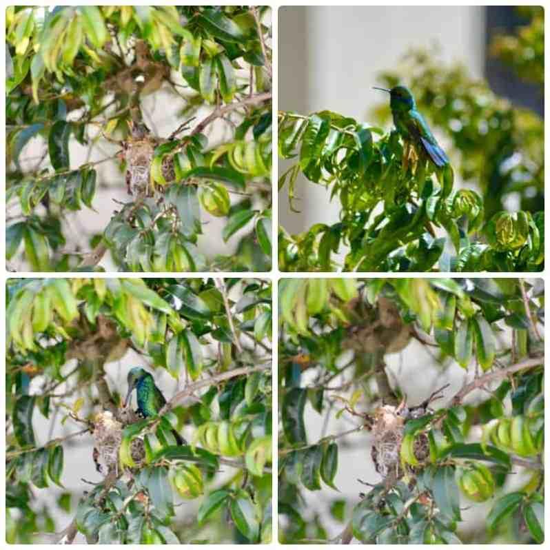 Kolibri-Entwicklung (Bild: M. Schäfer, Textrakt)