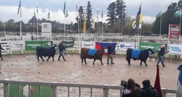 SORPRESAS EN LA EXPO GANADERA DE LA RURAL DE RÍO CUARTO