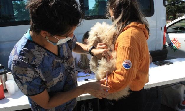 Mascotas vacunadas
