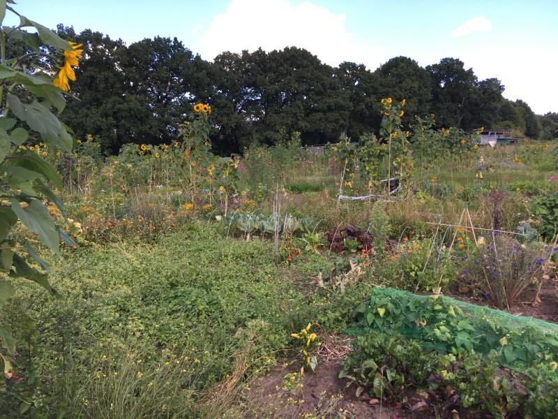 Gartenparzellen in Eidelstedt