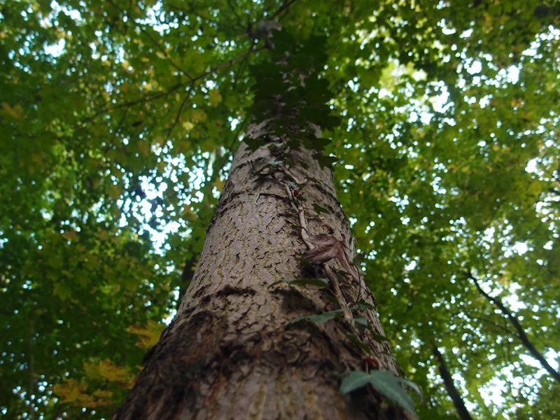 Baum im Niendorfer Gehege