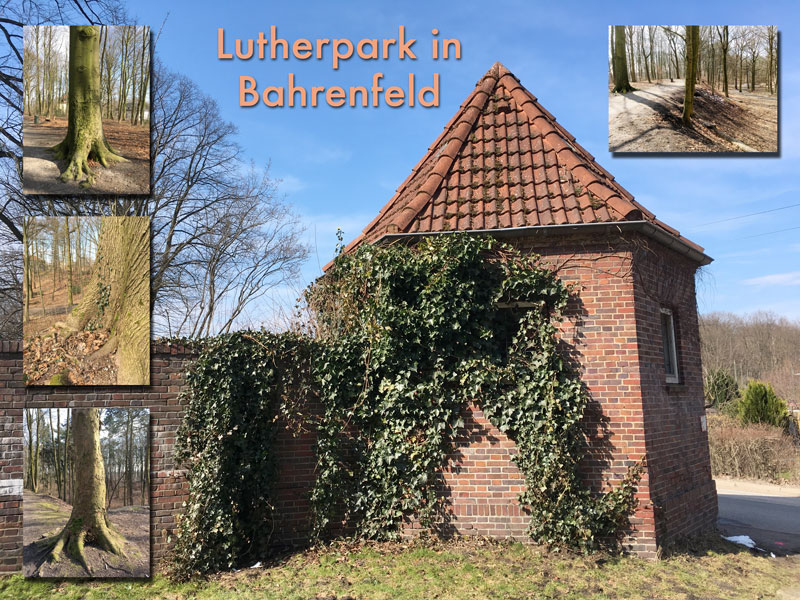 Lutherpark in Bahrenfeld
