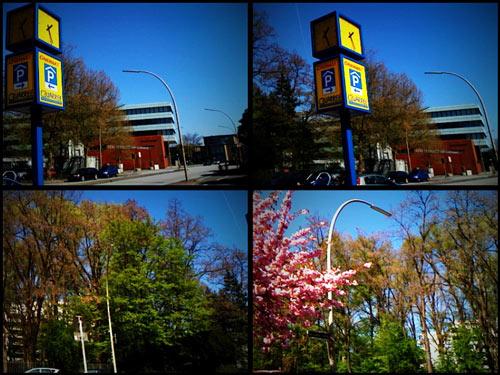 Staatsarchiv und Japanische Kirschblüte in der Kattunbleiche