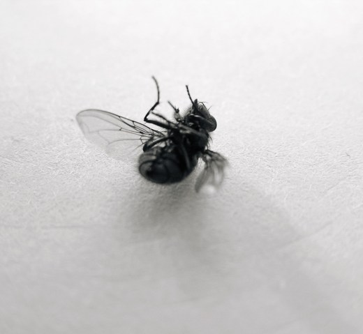 fly_04
