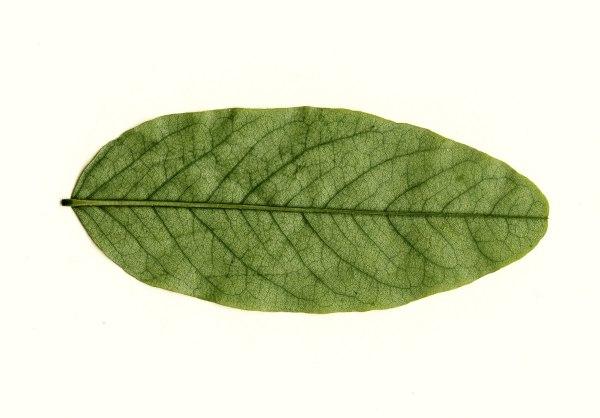9 Leaf Textures Texture Fabrik