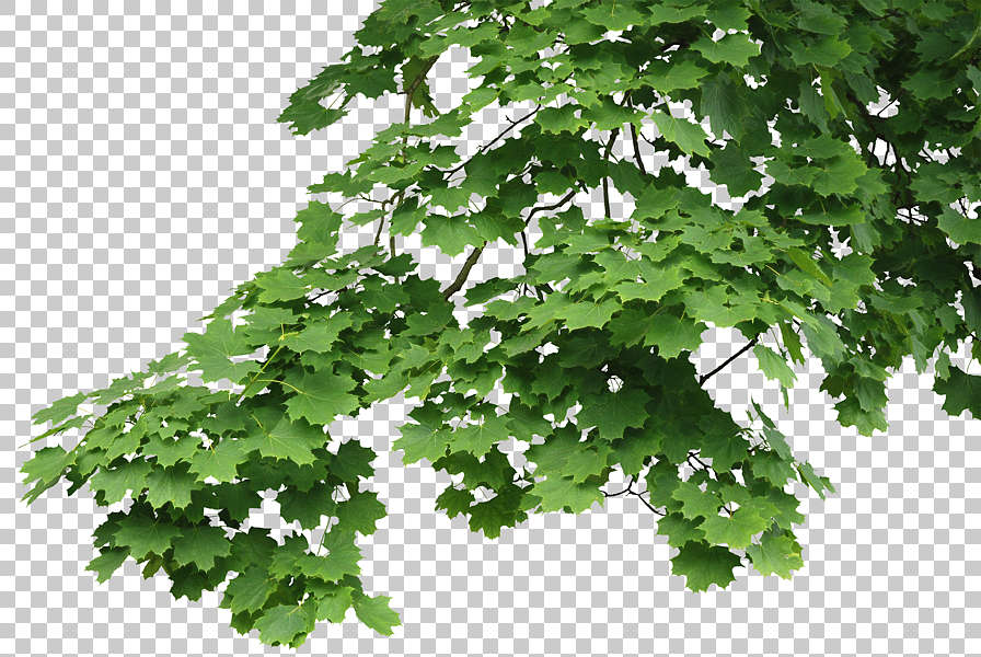 Trees0046 Free Background Texture leaves alpha masked