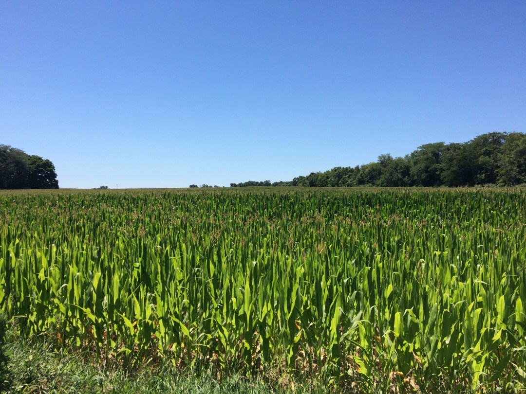 corn fields, farm life, Indiana crops, land of corn