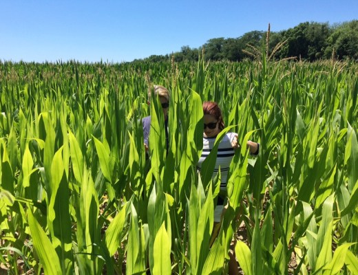 corn fields, Indiana, crops, family roots