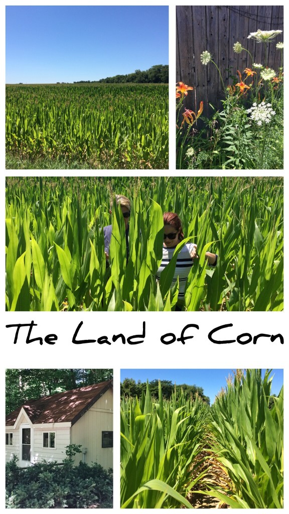 land of corn, Indiana crops, corn fields, sisterhood, country life, farms