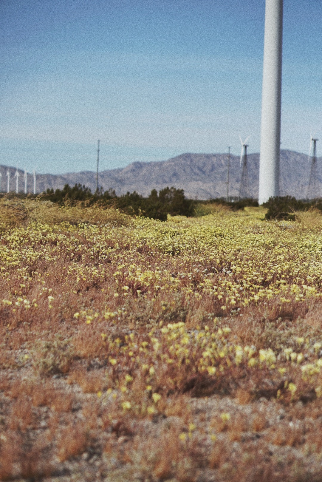 desert, Windmill Farms, beautiful scenery in California, where to visit in California, Palm Springs views,