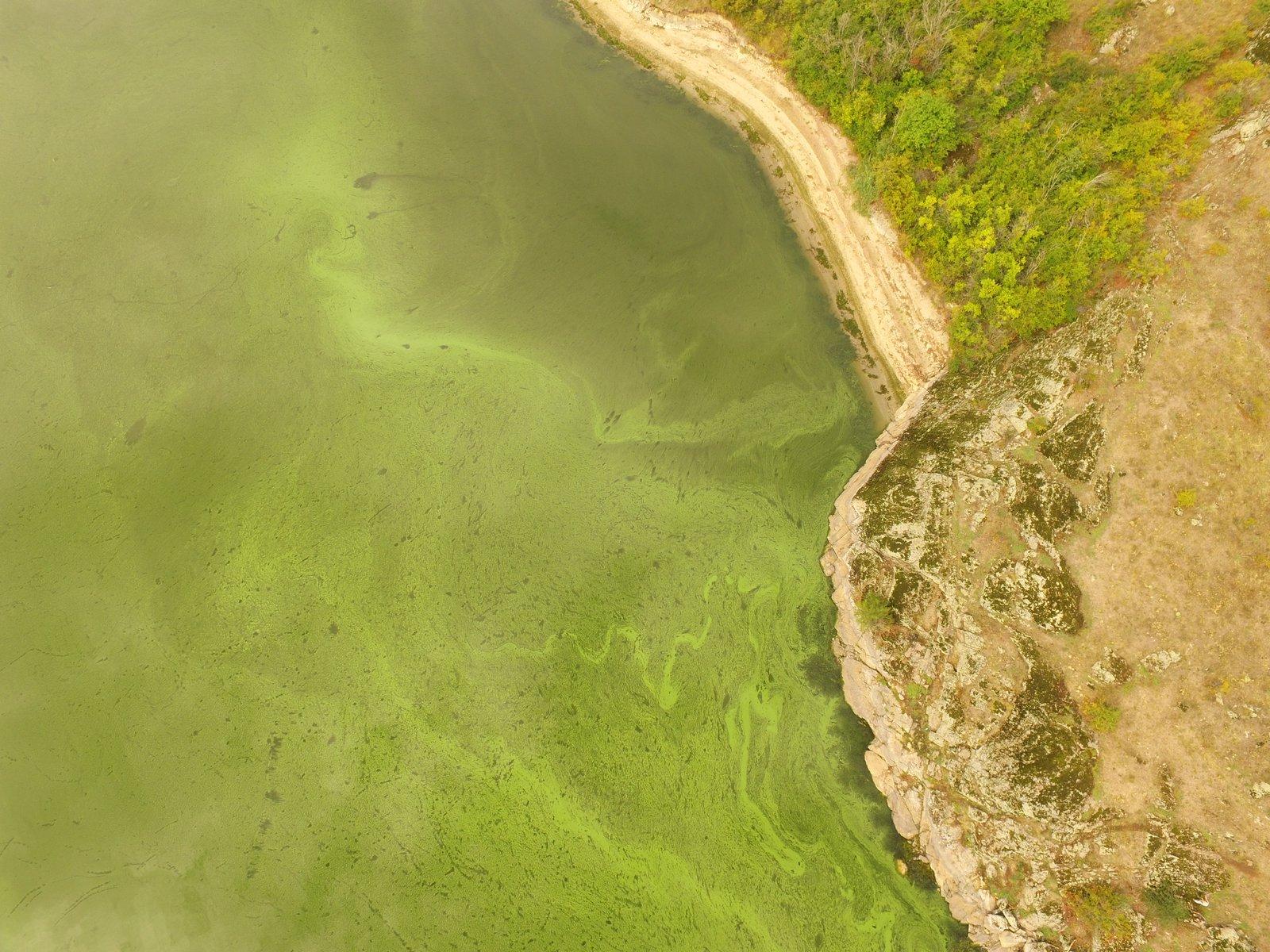 Цвітіння водосховища влітку - аерофото Михайло Хитрук2.JPG