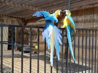 Sich neckende Vögel