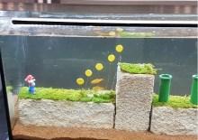 Wasser-Diorama