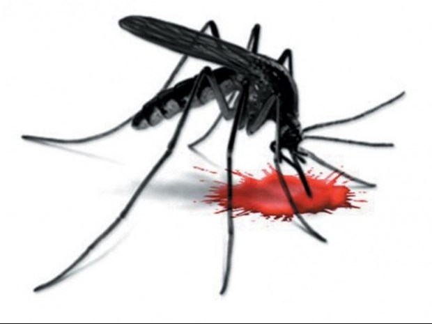 latest news on dengue