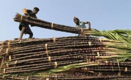 चीनी उत्पादन में पहली बार यूपी अव्वल, शामली नम्बर वन